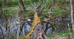 Παλαιό πάρκο, εκατονταετές πάρκο, πεσμένο δέντρο, λίμνη λάσπης Στοκ Φωτογραφία