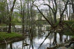 Παλαιό πάρκο, εκατονταετές πάρκο, πεσμένο δέντρο, λίμνη λάσπης Στοκ Φωτογραφίες