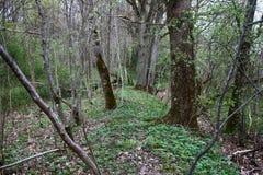 Παλαιό πάρκο, εκατονταετές πάρκο, πεσμένο δέντρο, λίμνη λάσπης Στοκ εικόνες με δικαίωμα ελεύθερης χρήσης