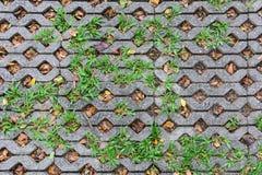 Παλαιό πάτωμα πετρών επίστρωσης με το πράσινο ένθετο χλόης στις τρύπες στοκ εικόνα με δικαίωμα ελεύθερης χρήσης