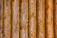 παλαιό πεύκο κούτσουρων Στοκ Εικόνες