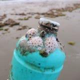 παλαιό πλαστικό κοραλλιών μπουκαλιών στοκ εικόνες
