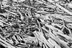 παλαιό σάπιο δάσος ακτών λ&i Στοκ φωτογραφία με δικαίωμα ελεύθερης χρήσης