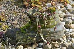 παλαιό σάπιο παπούτσι Στοκ Εικόνες