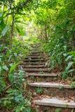 Παλαιό σκαλοπάτι πετρών στο πράσινο τροπικό δάσος ως τμήμα του ίχνους πεζοπορίας Ζούγκλα στοκ φωτογραφία με δικαίωμα ελεύθερης χρήσης