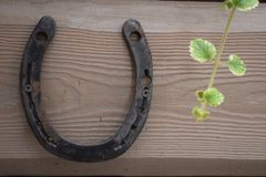 Παλαιό σκουριασμένο πέταλο που καθορίζεται στα καρφιά στην παλαιά ξύλινη επιφάνεια στοκ φωτογραφία με δικαίωμα ελεύθερης χρήσης