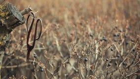 Παλαιό σκουριασμένο ψαλιδιού άνοιξη μήκος σε πόδηα αέρα μούρων κήπων άγριο hd κανένα απόθεμα βίντεο