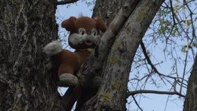 Παλαιό σκυλί παιχνιδιών βελούδου σε ένα δέντρο απόθεμα βίντεο