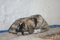 Παλαιό σκυλί ύπνου στην οδό στοκ φωτογραφία με δικαίωμα ελεύθερης χρήσης