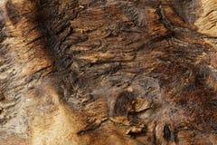 παλαιό τραχύ δάσος σύστασης Στοκ εικόνα με δικαίωμα ελεύθερης χρήσης