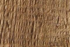 παλαιό τραχύ δάσος σύστασης Στοκ Εικόνα