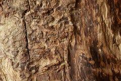 παλαιό τραχύ δάσος σύστασης Στοκ φωτογραφία με δικαίωμα ελεύθερης χρήσης