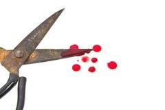 Παλαιό ψαλίδι και μια απελευθέρωση του αίματος. Στοκ Φωτογραφία
