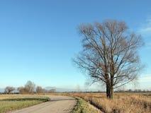 Παλαιό όμορφο δέντρο κοντά στο δρόμο, Λιθουανία Στοκ εικόνα με δικαίωμα ελεύθερης χρήσης