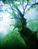 παλαιό δέντρο Στοκ εικόνες με δικαίωμα ελεύθερης χρήσης
