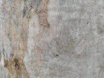 Παλαιό taxture δέντρων και ξύλινη ταπετσαρία υποβάθρου στοκ εικόνες
