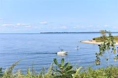 Παλιρροιακά vistors εκβολών Long Island της Νέας Υόρκης Στοκ φωτογραφίες με δικαίωμα ελεύθερης χρήσης