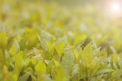 Πανέμορφα φύλλα σε έναν φωτεινό πράσινο του Μπους με τα σταγονίδια πτώσης βροχής στο φύλλο στοκ εικόνες με δικαίωμα ελεύθερης χρήσης