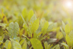 Πανέμορφα φύλλα σε έναν φωτεινό πράσινο του Μπους με τα σταγονίδια πτώσης βροχής στο φύλλο στοκ εικόνα