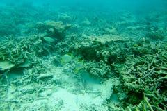 Πανέμορφη άποψη σχετικά με τις κοραλλιογενείς υφάλους και την άσπρη άμμο κάτω από το νερό όμορφο τοπίο ανασκόπησης Μαλδίβες, Ινδι Στοκ Φωτογραφία