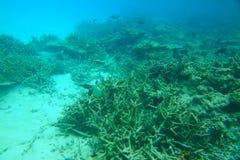 Πανέμορφη άποψη σχετικά με τις κοραλλιογενείς υφάλους και την άσπρη άμμο κάτω από το νερό όμορφο τοπίο ανασκόπησης Στοκ Εικόνες
