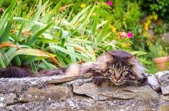 Πανέμορφη γάτα στην ενέδρα, θερινή ημέρα Στοκ εικόνες με δικαίωμα ελεύθερης χρήσης