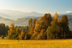 Πανέμορφη ομιχλώδης ανατολή στα βουνά Καλό θερινό τοπίο Λουλούδια στα χλοώδη λιβάδια και δασικός λόφος στην ομίχλη στοκ εικόνα με δικαίωμα ελεύθερης χρήσης