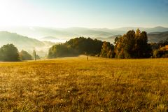 Πανέμορφη ομιχλώδης ανατολή στα βουνά Καλό θερινό τοπίο Λουλούδια στα χλοώδη λιβάδια και δασικός λόφος στην ομίχλη στοκ φωτογραφία με δικαίωμα ελεύθερης χρήσης