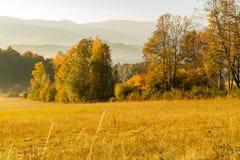 Πανέμορφη ομιχλώδης ανατολή στα βουνά Καλό θερινό τοπίο Λουλούδια στα χλοώδη λιβάδια και δασικός λόφος στην ομίχλη στοκ φωτογραφία