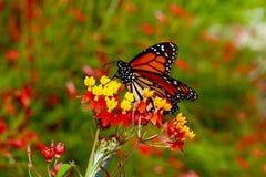 Πανέμορφη πεταλούδα Στοκ Εικόνα