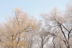 Πανέμορφος παγετός στα δέντρα Στοκ Φωτογραφία