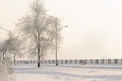 Πανέμορφος παγετός στα δέντρα Στοκ Εικόνα