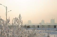 Πανέμορφος παγετός στα δέντρα Στοκ Εικόνες