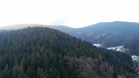 Πανέμορφο βουνό που καλύπτεται στα δέντρα, καταπληκτικός εναέριος πυροβολισμός σε 4k απόθεμα βίντεο