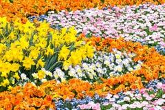 Πανέμορφο κρεβάτι λουλουδιών Στοκ Εικόνα