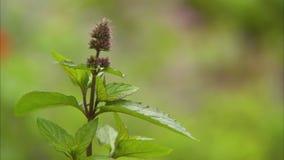 Πανέμορφο λουλούδι στο μακρο πυροβολισμό απόθεμα βίντεο