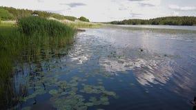 Πανέμορφο τοπίο φύσης μια θερινή ημέρα Πράσινες εγκαταστάσεις, επιφάνεια νερού καθρεφτών και μπλε ουρανός με τα λευκά σαν το χιόν απόθεμα βίντεο
