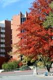 πανεπιστήμιο reno της Νεβάδα&sigm στοκ εικόνες
