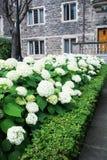 Πανεπιστημιακοί ιστορικοί κτήριο και κήπος του Τορόντου Στοκ φωτογραφίες με δικαίωμα ελεύθερης χρήσης