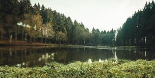 Πανοραμική άποψη μιας μικρής λίμνης στο δάσος στοκ φωτογραφία