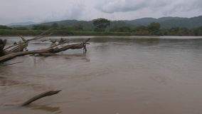 Πανοραμική άποψη | Νεκρά σαφή δέντρα ποταμών, Κολομβία φιλμ μικρού μήκους