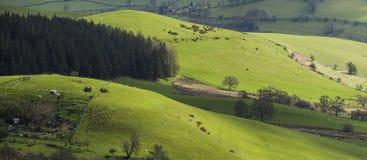 Πανοραμική άποψη της βρετανικής επαρχίας στην άνοιξη στοκ φωτογραφία