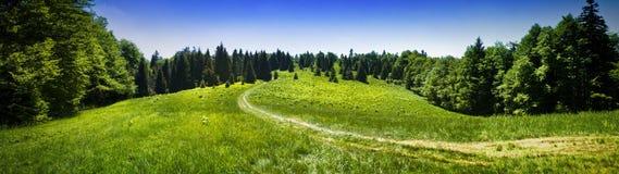 Πανοραμική άποψη του λιβαδιού βουνών στο δάσος Στοκ Εικόνα