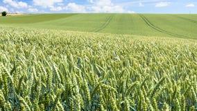 πανοραμική άποψη του πράσινου τομέα σίτου Picardy Στοκ φωτογραφία με δικαίωμα ελεύθερης χρήσης