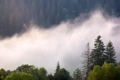Πανοραμική άποψη του misty δάσους στα Καρπάθια βουνά στοκ εικόνα με δικαίωμα ελεύθερης χρήσης
