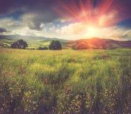Πανοραμική άποψη των ανθίζοντας λουλουδιών, του θερινού λιβαδιού στα βουνά και του μπλε νεφελώδους ουρανού στοκ φωτογραφία με δικαίωμα ελεύθερης χρήσης