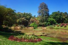 Πανοραμική άποψη των βασιλικών βοτανικών κήπων βασιλιάδων, Peradeniya, Σρι Λάνκα Αλέα, λίμνη και ποταμός Στοκ Εικόνες