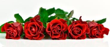 Πανοραμική άποψη των κόκκινων τριαντάφυλλων Στοκ φωτογραφίες με δικαίωμα ελεύθερης χρήσης