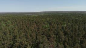 Πανοραμική θέα του όμορφου πράσινου δασικού εναέριου πυροβολισμού : Η κάμερα πετά προς τα εμπρός πέρα από το δάσος φιλμ μικρού μήκους