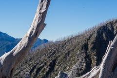 Πανοραμικός από την κορυφή του ηφαιστείου Chaiten στην Παταγωνία, Χιλή δ στοκ φωτογραφίες με δικαίωμα ελεύθερης χρήσης